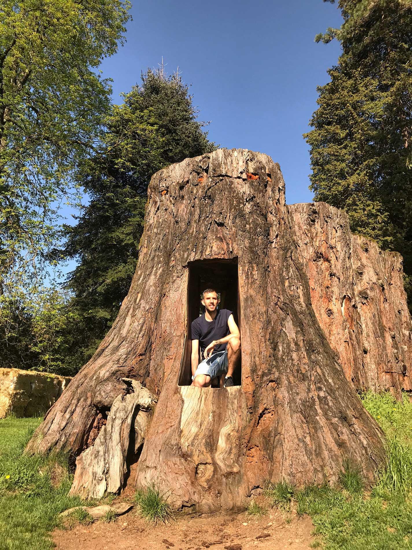 Parco-delle-Terme-Levico-Valsugana-Sequoia-Americana-tagliata