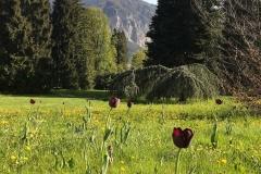Parco-delle-Terme-Levico-Valsugana-Giardino-alberi-tulipani-montagne