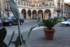 piazza-mazzini-catania-cactus-piante-esotiche