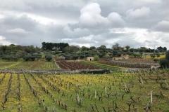 campagna-attorno-a-cisternino-in-puglia-nuvole-grigie-campi-coltivati