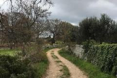 strada-di-campagna-attorno-a-cisternino-in-puglia