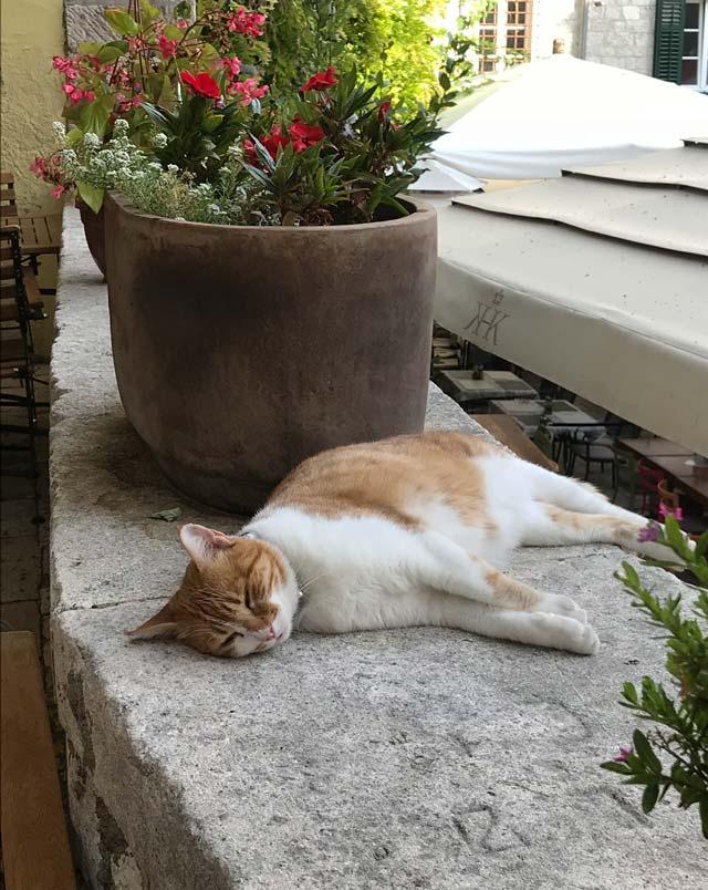 gatto-che-dorme-tra-le-vie-di-sebenico