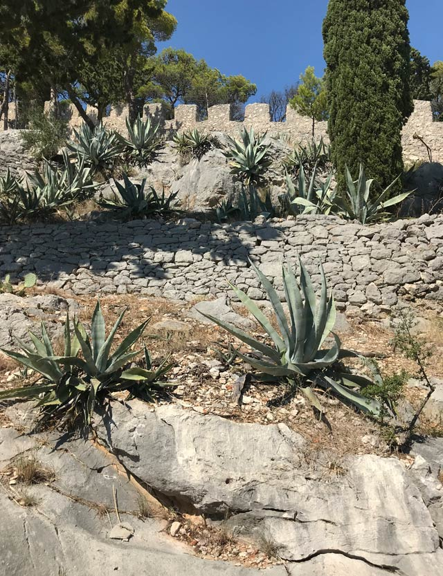 hvar-giardino-mediterraneo-sotto-la-fortezza