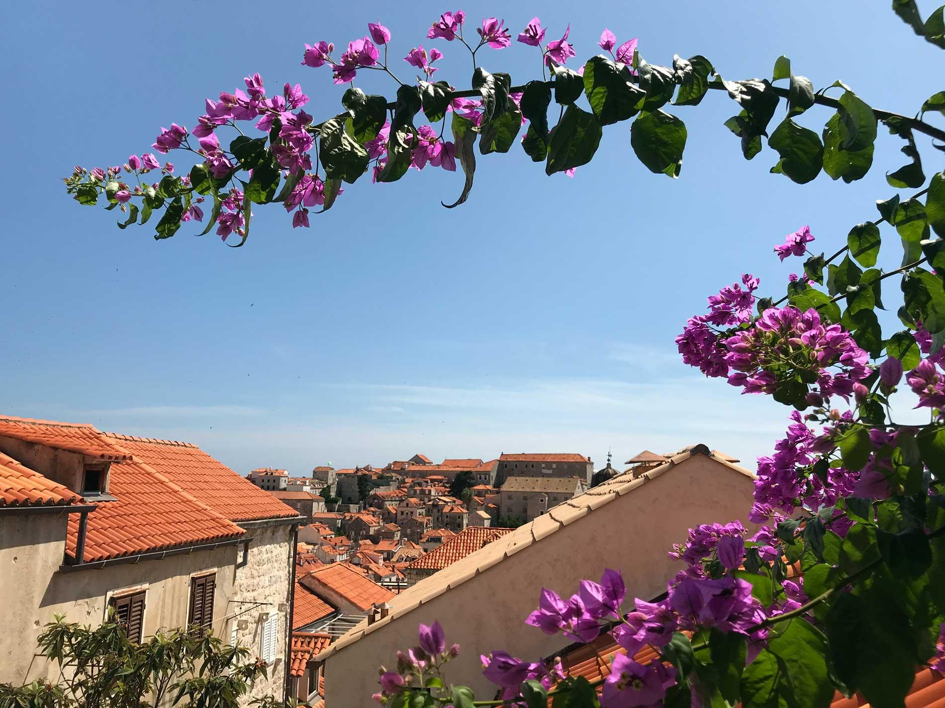 Dubrovnik-Croazia-panorama-Citta-Vecchia-buganvillea-tetti-rossi-cielo