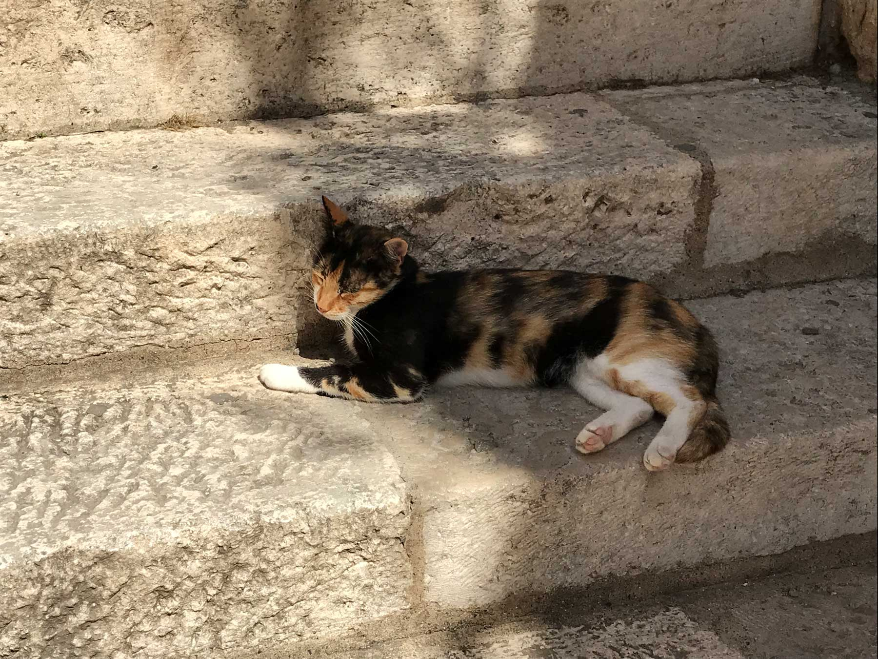 Dubrovnik-Croazia-gatto-di-strada-che-riposa