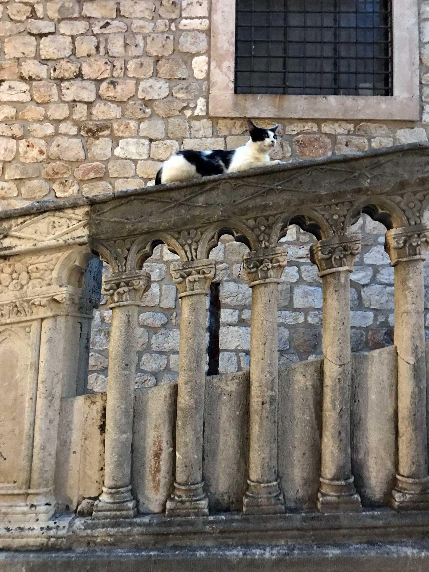 Dubrovnik-Croazia-monastero-dei-benedettini-gatto-sulla-balaustra