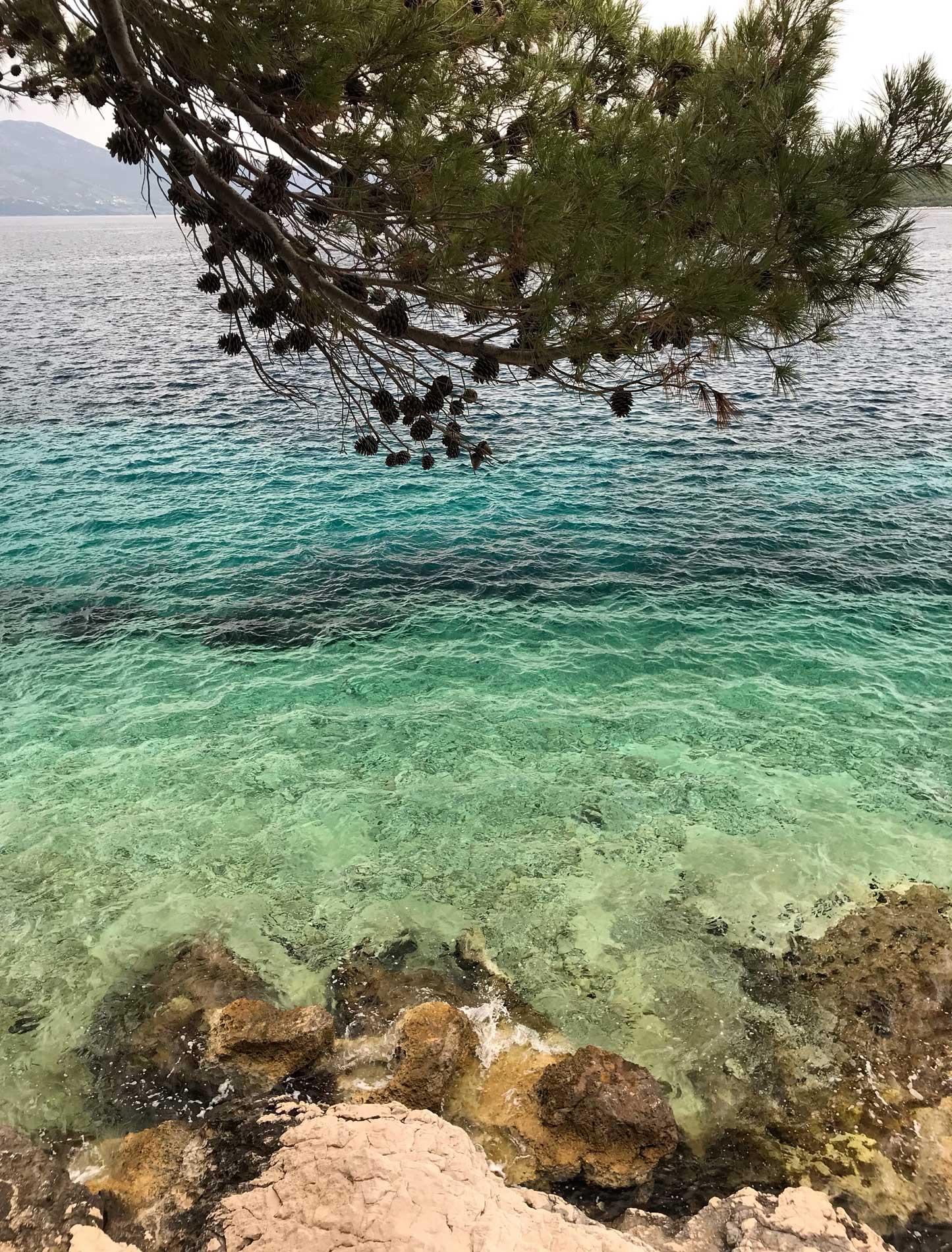 Korcula-Croazia-mare-cristallino-pino-marittimo