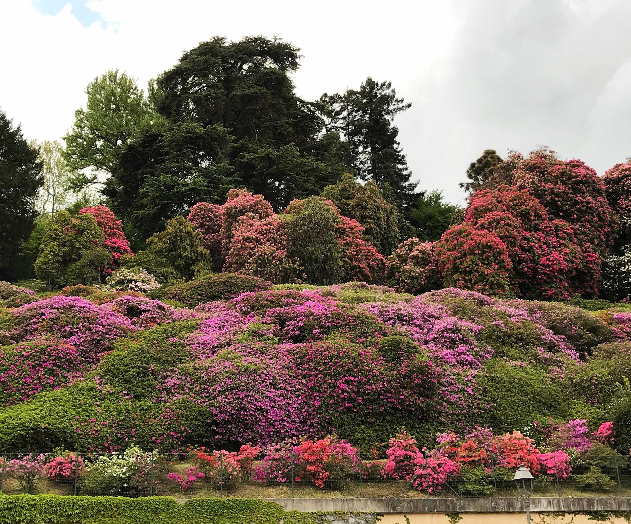 Villa-Carlotta-Tremezzo-Lago-di-Como-fioritura-azalee