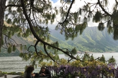 Parco-Teresio-Olivelli-Tremezzo-Lago-di-Como-abete-cane-panorama