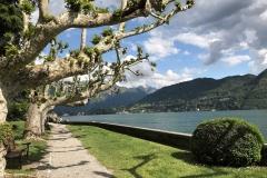 Parco-Teresio-Olivelli-Tremezzo-Lago-di-Como-viale-pioppi-lago
