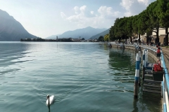Lovere-Lago-dIseo-lungolago-cigno-acqua-azzurra