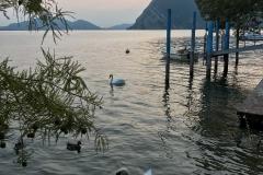 Monte-Isola-Montisola-cigni-lago-dIseo-tramonto