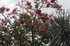 il-giardino-segreto-Marrakech-rue-mouassine-giardino-esotico-fiori