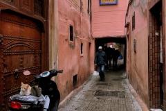 Marrakech-medina-via-gatti-sul-motorino-persone