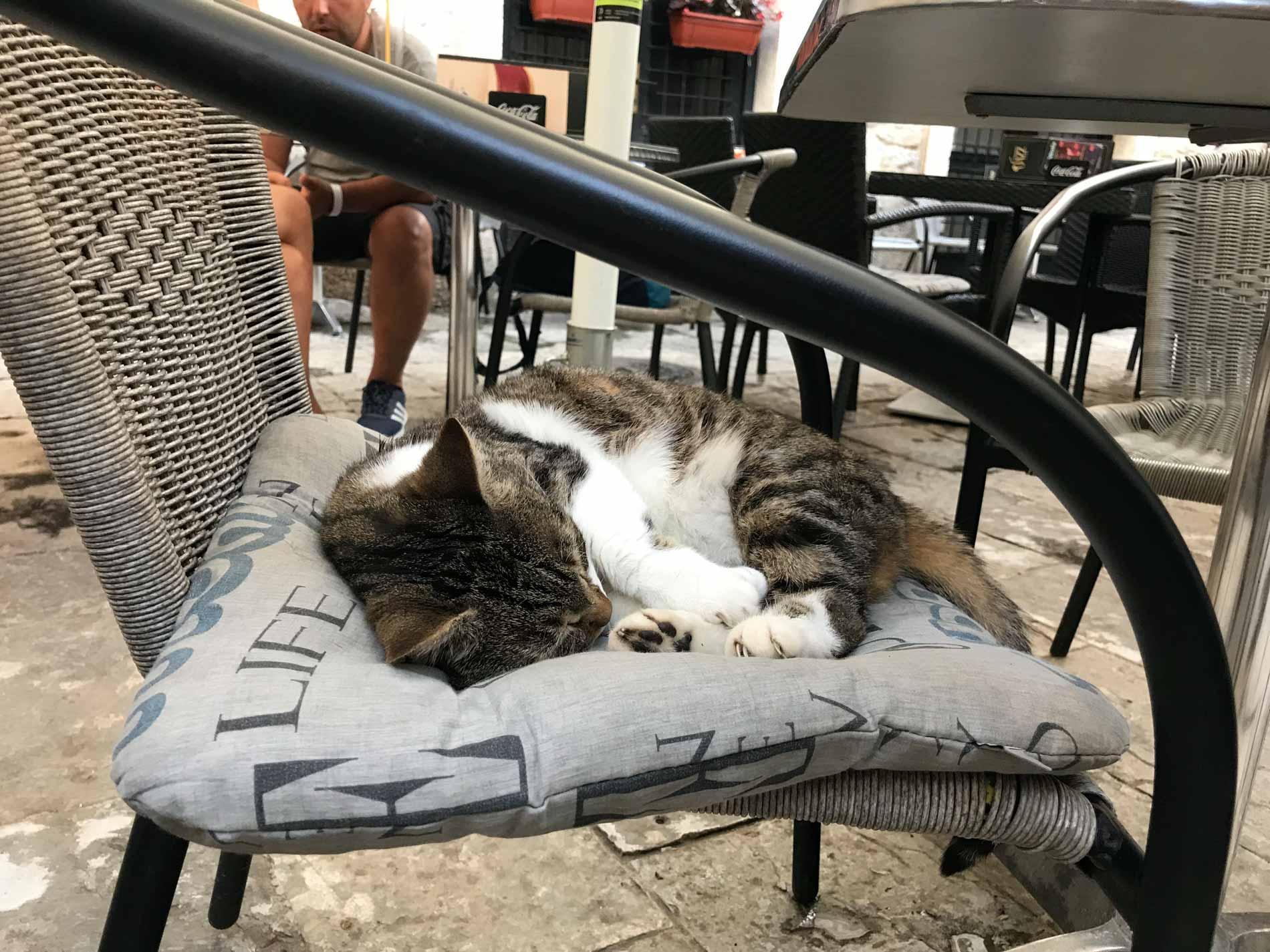 Kotor-Montenegro-Piazza-San-Luca-gatto-che-dorme-sul-cuscino