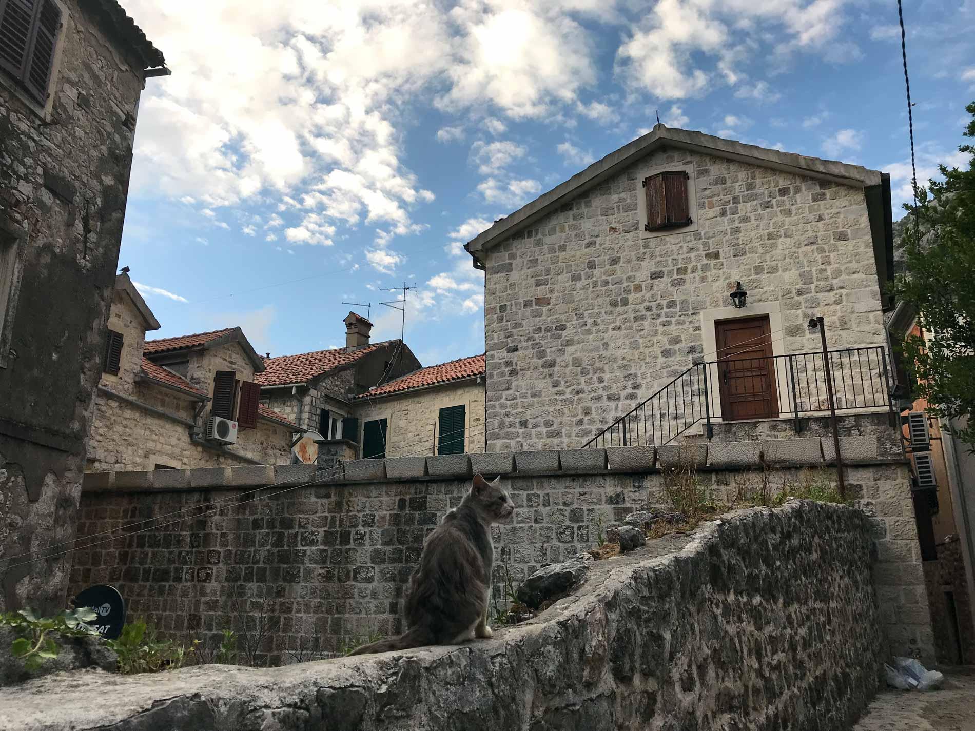 Kotor-Montenegro-via-Ulica-2-muro-decrepito-gatto-casa-cielo
