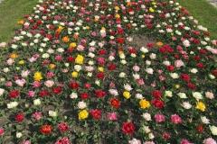 Parco-sigurta-valeggio-sul-mincio-tulipanomania-tulipani-colorati