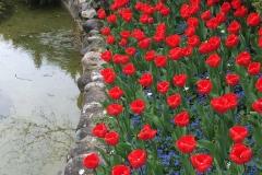 aiuola-di-tulipani-rossi-e-fiorellini-blu-parco-sigurta