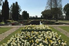 distesa-di-narcisi-gialli-e-bianchi-parco-giardino-sigurta