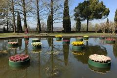 giardini-acquatici-di-parco-sigurta-boe-con-tulipani-e-giacinti-in-fiore