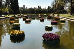 grandi-giardini-acquatici-di-parco-giardino-sigurta-giacinti-e-tulipani-galleggianti