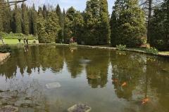 laghetti-fioriti-di-parco-sigurta-riflessi-nellacqua-pesci