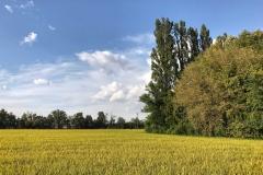 Certosa-di-Pavia-campo-dorato