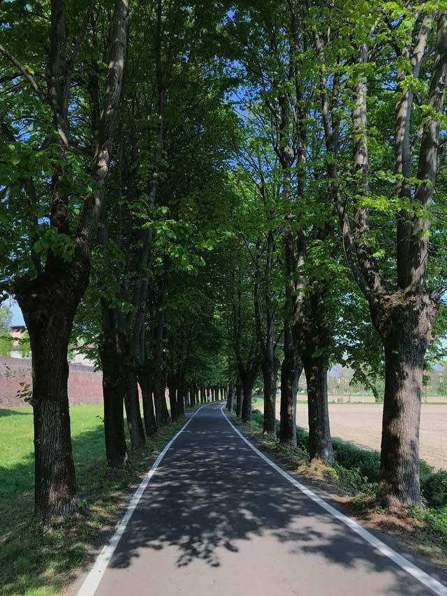 soncino-viale-alberato-che-apre-il-borgo