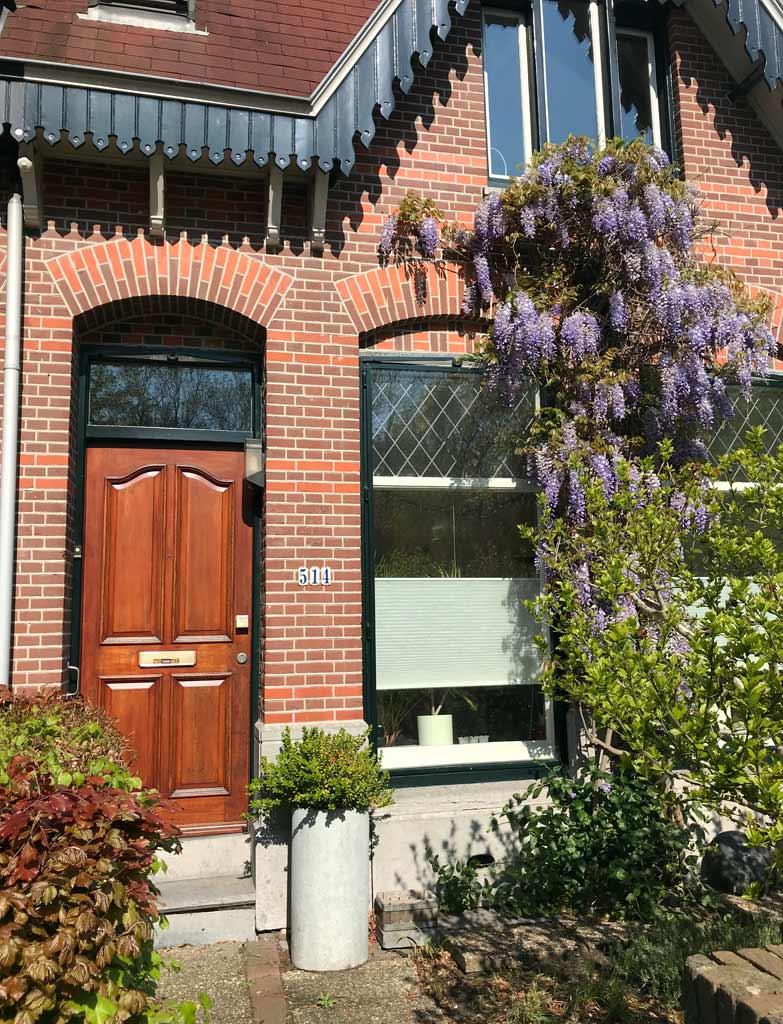 ingresso-di-una-casa-di-haarlem-in-olanda-con-glicine-in-fiore