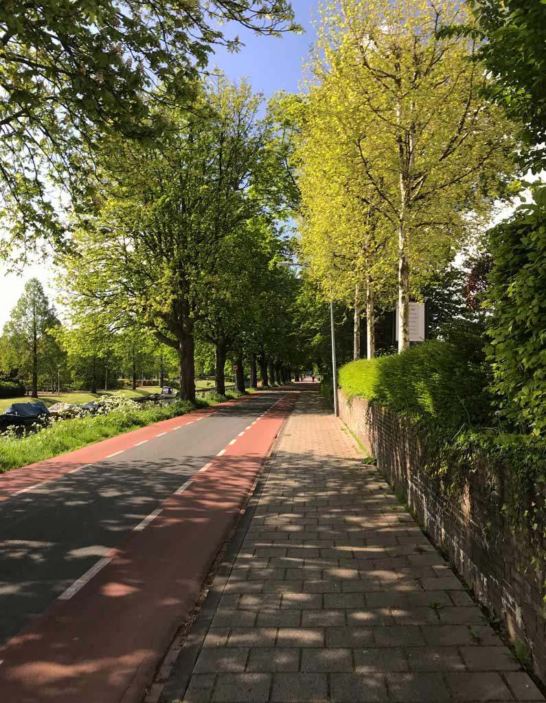 nord-olanda-pista-ciclabile-accanto-alla-strada-tra-gli-alberi