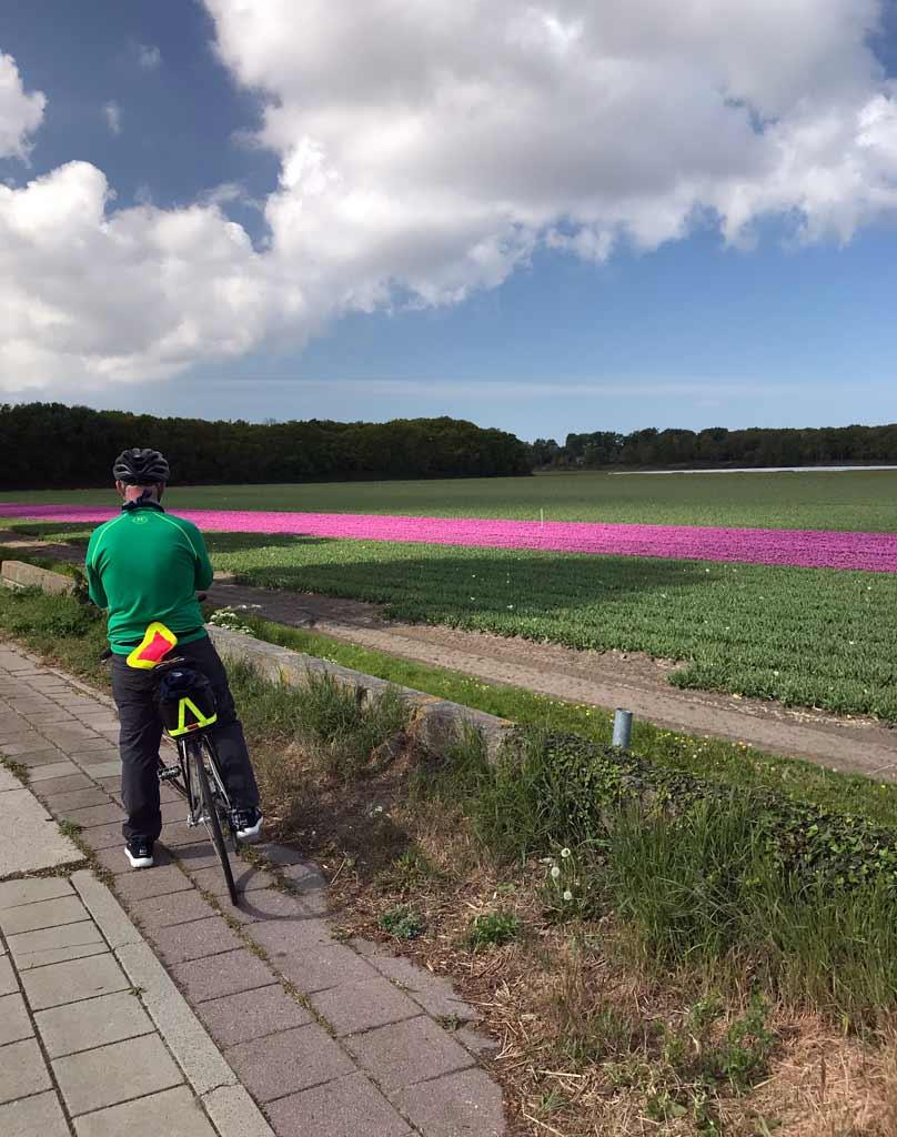 ciclista-fotografa-un-campo-di-tulipani-in-olanda