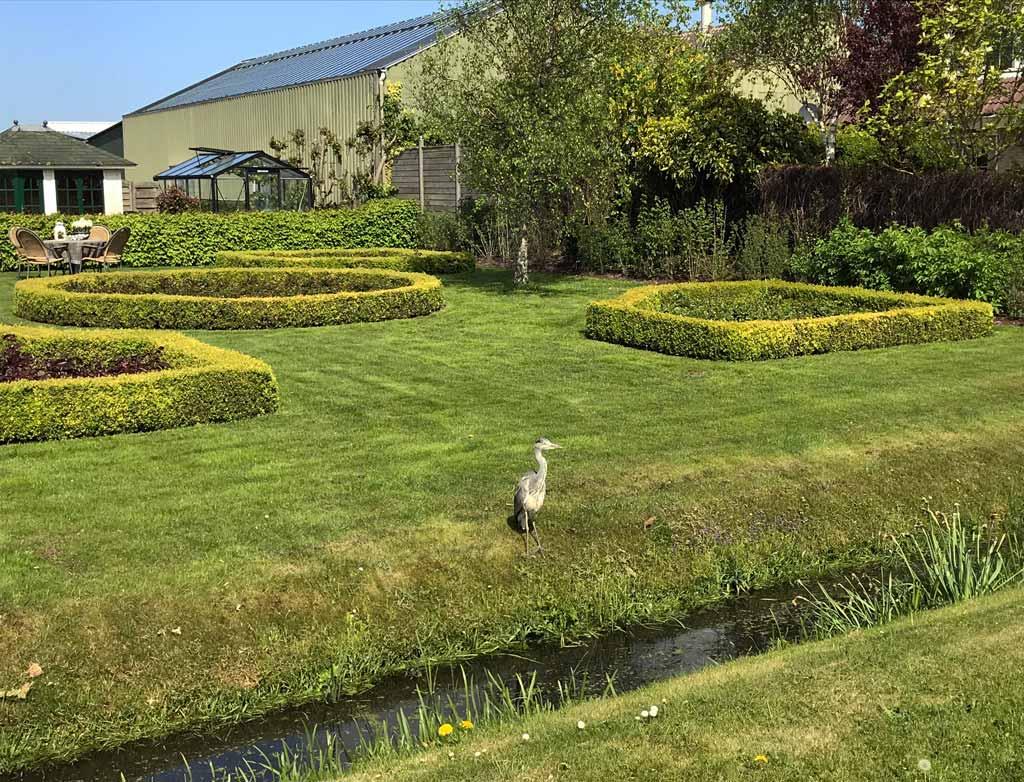 airone-grigio-in-un-giardino-di-una-casa-di-de-zilk-in-olanda