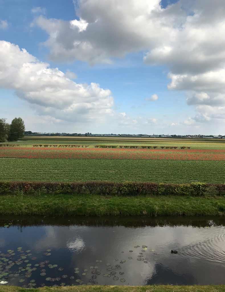 vista-panoramica-dei-campi-di-tulipani-da-parco-keukenhof