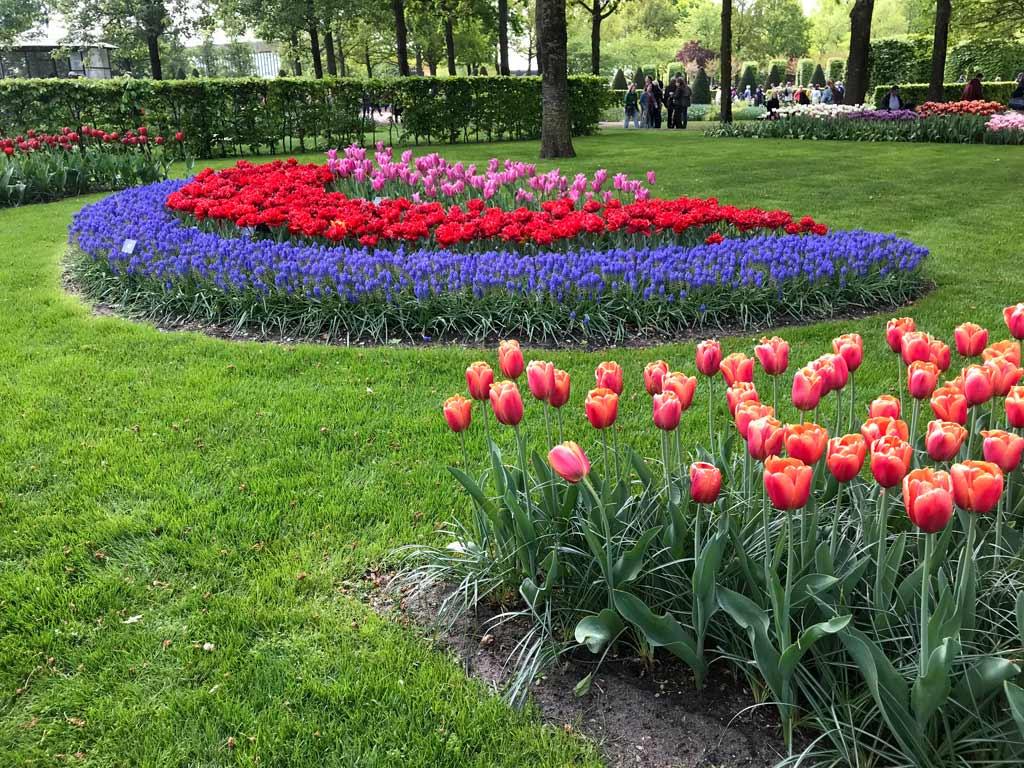 aiuole-di-tulipani-del-giardino-botanico-keukenhof