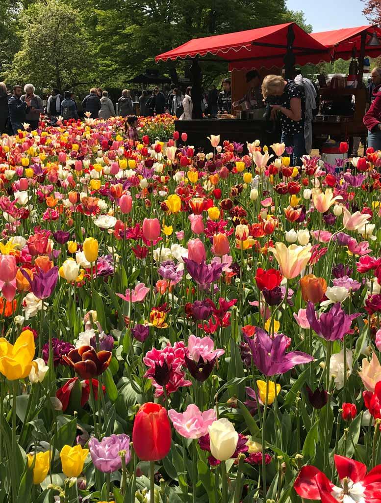 turista-fotografa-il-tripudio-di-colori-dei-tulipani-di-parco-keukenhof