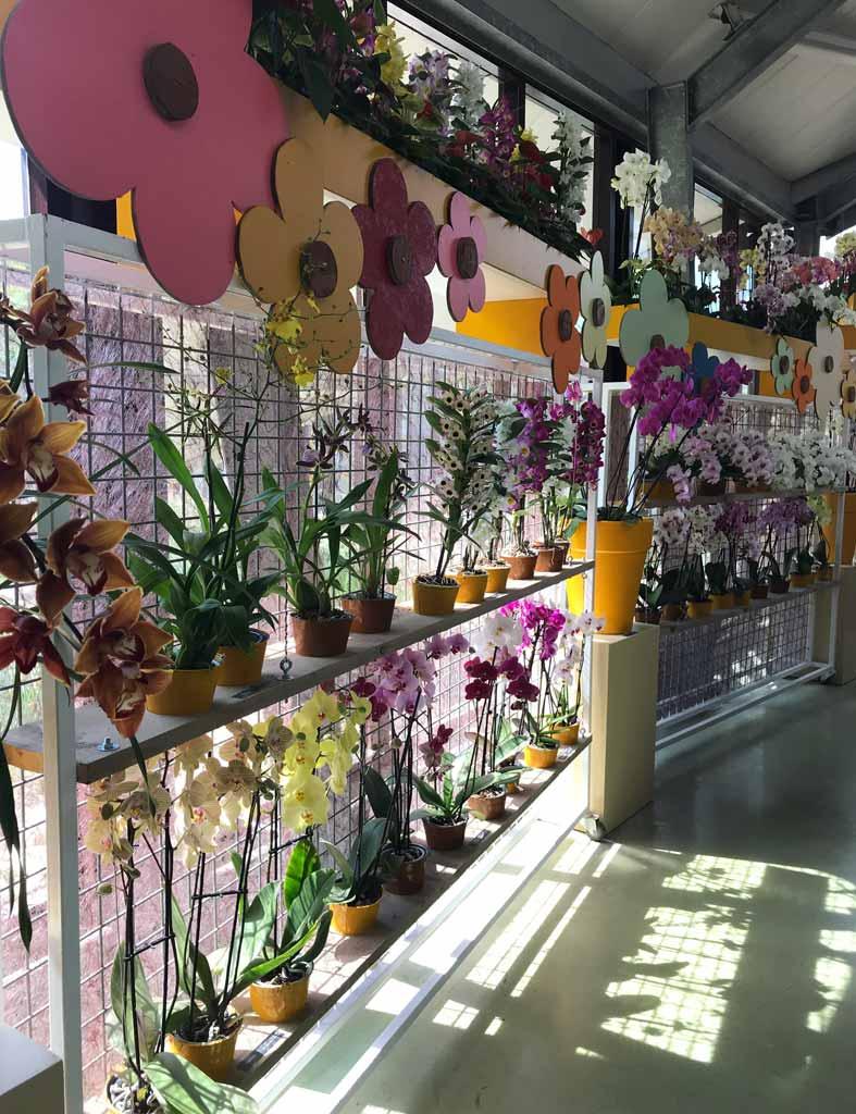 keukenhof-2019-padiglione-beatrix-mostra-di-orchidee-flower-power