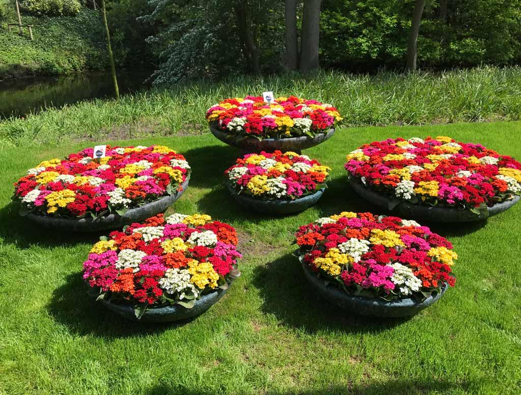 aiuole-di-fiori-colorati-a-parco-keukenhof-irene