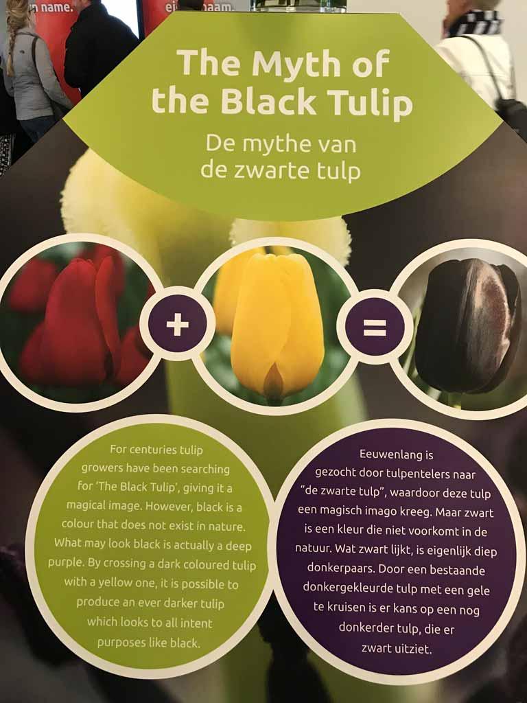 padiglione-juliana-parco-keukenhof-cartello-sul-tulipano-nero