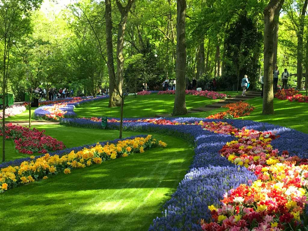 parco-keukenhof-distese-di-tulipani-colorati-e-muscari