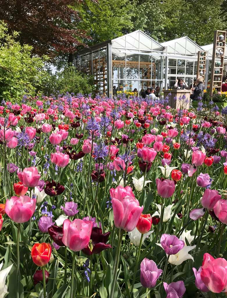 mix-di-tulipani-nel-parco-di-keukenhof-in-olanda