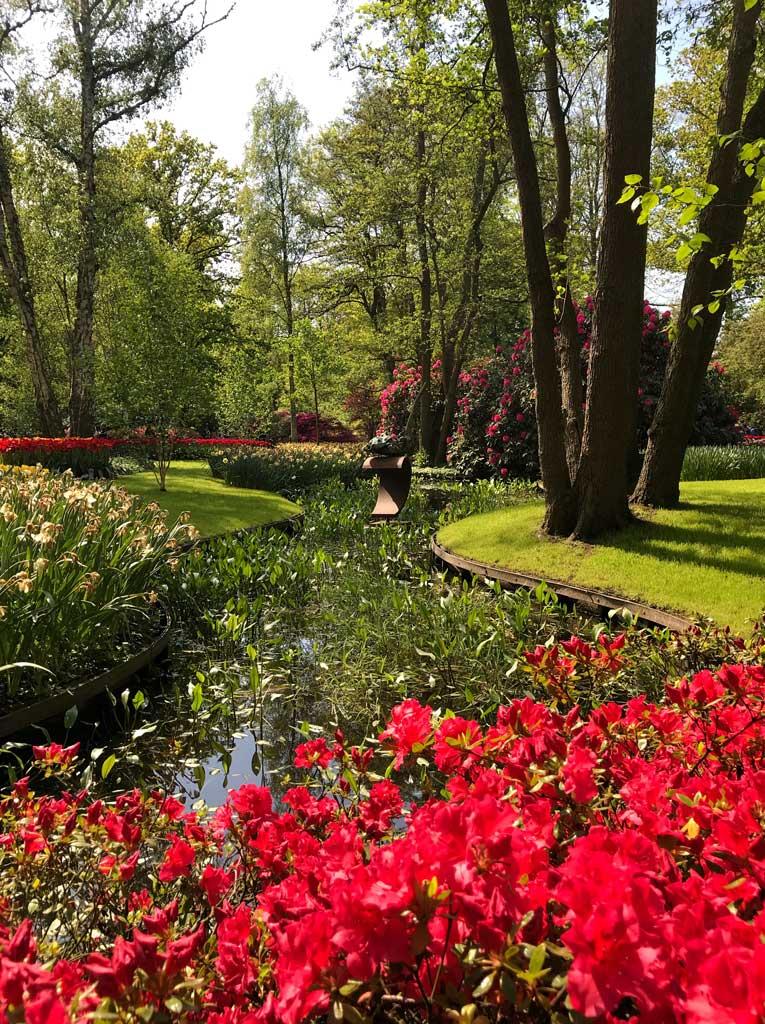 parco-di-keukenhof-scorcio-con-azalea-rossa-in-fiore-e-un-canale