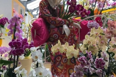 keukenhof-padiglione-beatrix-orchidee-tema-flower-power