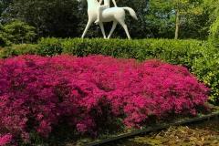 scultura-con-cavallo-davanti-a-una-azalea-rosa-in-fiore