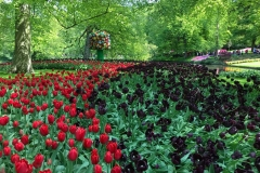 tulipani-rossi-e-neri-con-scultura-a-parco-keukenhof