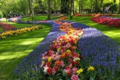 keukenhof-2019-strisce-di-tulipani-e-muscari-blu