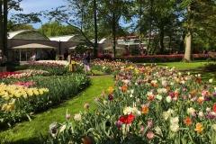 parco-keukenhof-tulipani-colorati-in-fiore-vicino-al-padiglione-willem-alexander