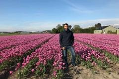 srake-simone-colombo-in-un-campo-di-tulipani-rosa-in-olanda