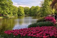 tulipani-in-fiore-a-parco-keukenhof-olanda-laghetto-alberi-natura